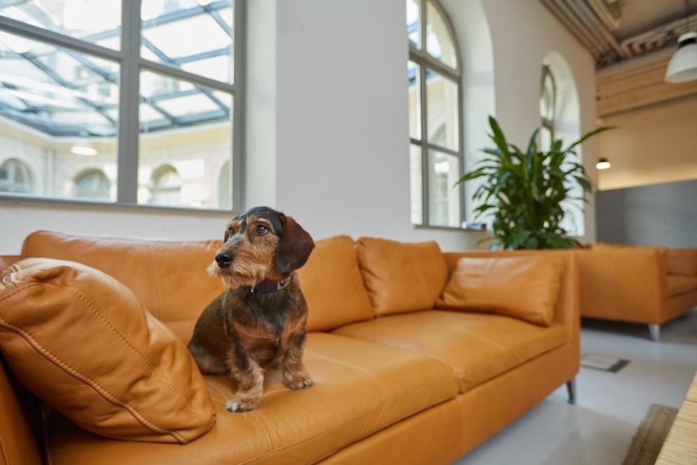 Kutya az irodában